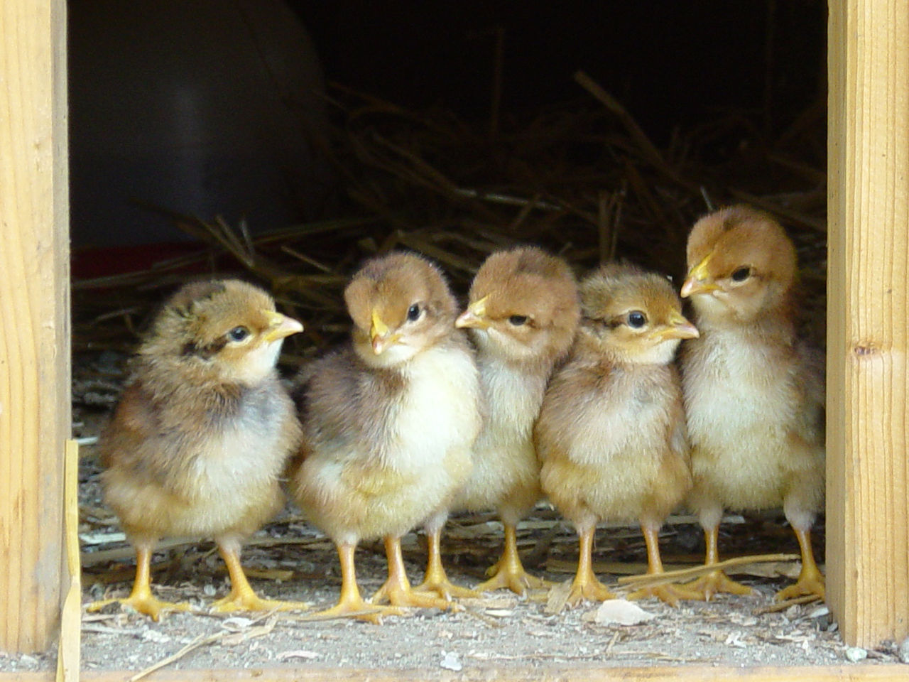 La independència de la rotonda de les gallines seria viable econòmicament